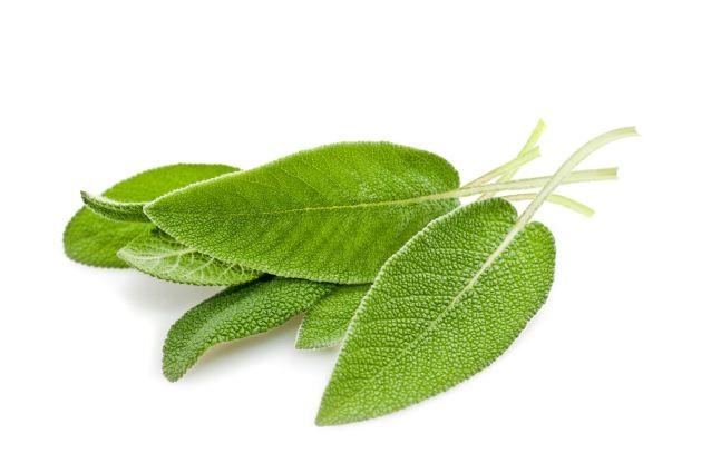 feuilles de sauge